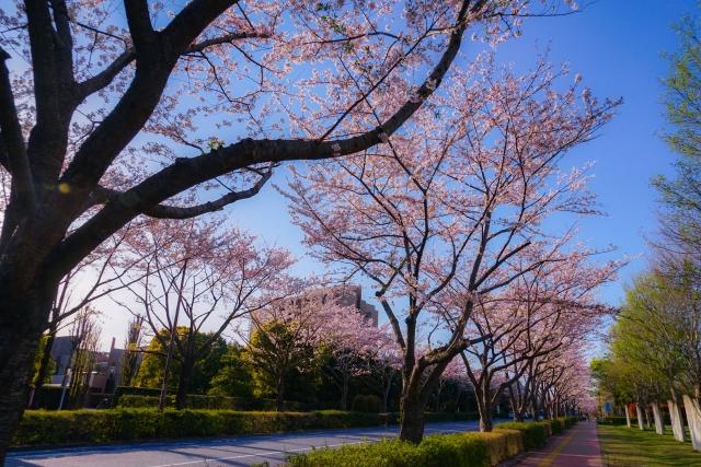 調布市内でオイシックスを買えるお店|東京の店舗情報
